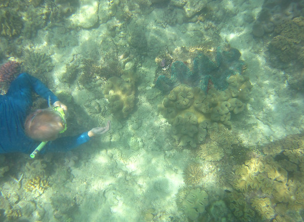 Snorkeling the Great Barrier Reef - giant clam