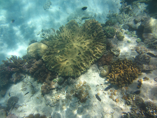 Snorkeling the Great Barrier Reef