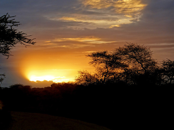 Safari sunrise